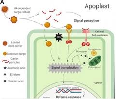 Nanoporteurs.jpg