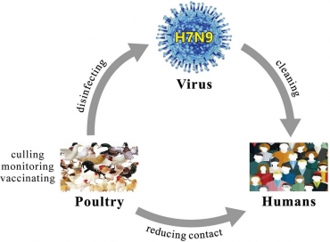 H7N9.jpg