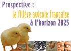 20_octobre_prospective_avicole_inra_article_full.png